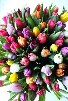 Tulip Bouquet....My favorite flower!