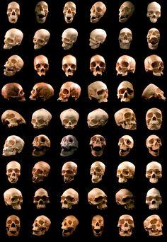 Human Skulls – 54 Free Images | Media Militia