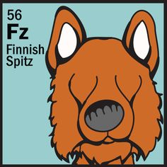Finnish Spitz   http://www.thedogtable.com/the-dog-table/non-sporting/finnish-spitz/
