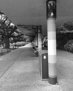 Those angles though. Thrusters of a spaceship  #animals #education #usa #travelgram #travelling #travelphotography #houstontx #houston #texas #blackandwhite #bnw #monochrome #instablackandwhite #monoart #insta_bw #bnw_society #bw_lover #bw_photooftheday #photooftheday #bw #instagood #bw_society #zoo