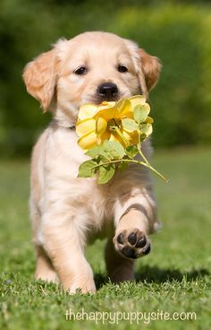 All puppies are perfectly adorable but some puppies are better suited to some families. This is where you can find out what to look for when buying a puppy