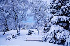 neptunesbounty:  Winter wonderland - Iceland by skarpi - www.skarpi.is on Flickr.