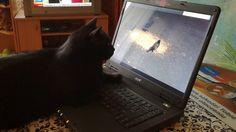 Kot uzależniony od internetu