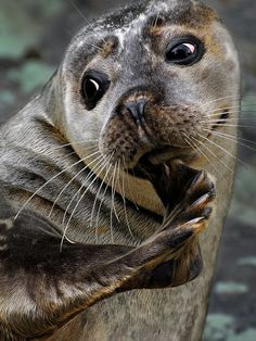 This seal has the same look my dog Dexter had when he scratched his chin too. So funny how the 2 could be similar.