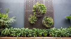 Vertical garden: something simple like this could close the view onto the neighbour's house
