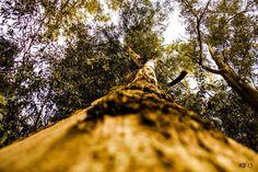 subida al cielo by Veronica Photography on 500px