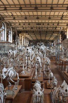 Paleontology museum ©zurchn