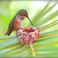 Science Discover Hummingbird feeding her newborns - Tiere - Pretty Birds Love Birds Beautiful Birds Animals Beautiful Birds Pics Cute Baby Animals Animals And Pets Funny Animals Wild Animals Pretty Birds, Love Birds, Beautiful Birds, Animals Beautiful, Birds Pics, Bird Pictures, Animal Pictures, Beautiful Pictures, Cute Funny Animals