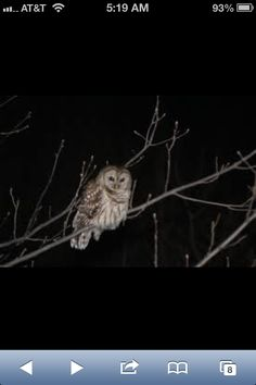 OWLS IN RHODE ISLAND!