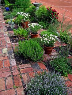 Brick Checkerboard Herb Garden -   Frames each plant for a nice display and tastefuly extends width of path -  pots of white daisies, red rose and blue pot for color.