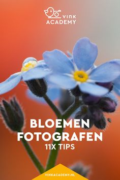Bloemen fotograferen: 11 tips • Vink Academy Studio Setup, Kindergarten, Florian, Photoshop, Tips, Creative, Garden, Plants, Photography