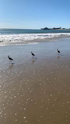 Me Clean, Beach Waves, Beach Photography, Family Love, Beach Party, Beautiful Beaches, Cruelty Free, Ocean, Birds