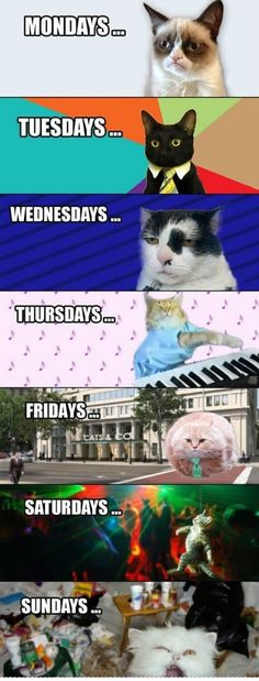 Cat related title, mondays, tuesdays, days of the week, cats