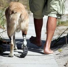 Wounded Warrior.       .....(KO) Heroes come in non-human form, too. I want to hug this pup and thank him for being my own personal hero. I love you puppy. Want to hug your neck.