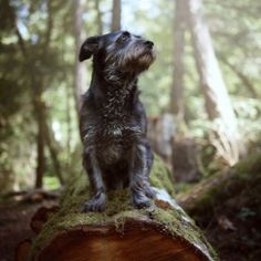 When you're lost in the woods, you sit,..and listen for your pissed off owner to call your name