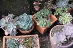 Succulents - Via Terri Planty