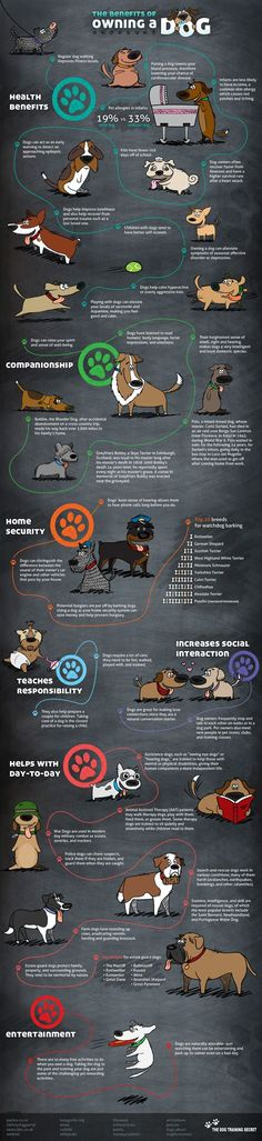 Benefits of owning a dog infographic. // The Dog Training Secret I Love Dogs, Puppy Love, Animals And Pets, Cute Animals, Nature Animals, Baby Animals, Pet Health, Samoyed, Dog Care
