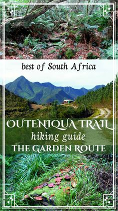 Complete guide to Outeniqua trail, Garden Route, South Africa Best Hiking Gear, Hiking Guide, Mozambique Beaches, Day Hike, Ultimate Travel, Africa Travel, Travel Guides, Travel Tips, Travel Around