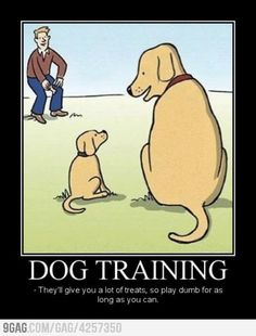 There are a lot of dog obedience classes that you can enroll your dog in, but most of these classes don't come cheap. If you don't want to spend a lot of money, you can train your dog on your own with this product. You can have 15-25 minutes of training time with your dog each day, and you'll be amazed by the results.