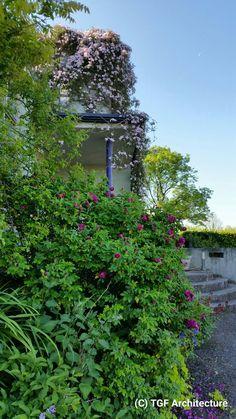 Wall planting at Sorrel Hill by Thomas G. Flynn MRIAI  TGF Architecture & Garden Design