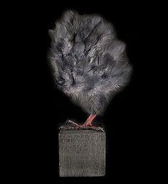 Mathieu Miljavac's conceptual taxidermy