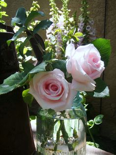 pink roses :)