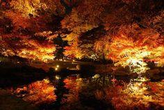 京都とはひと味ちがう風情がある。ライトアップが華やかな都内の紅葉スポット4選   by.S