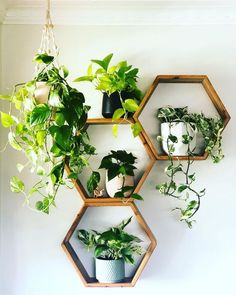 golden pothos plant shelfie small plants plant gang plant family cute pots for plants plant display green foliage plants leaves plants at home living with plants air purifying house plants clean air p Golden Pothos Plant, Air Cleaning Plants, Foliage Plants, Air Plants, Plants Indoor, Potted Plants, Cactus Plants, Garden Plants, House Plants Air Purifying