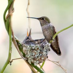 How to attract hummingbirds to your garden. So cute <3