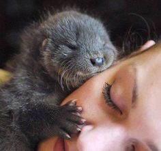 Funny pictures about Her Significant Otter. Oh, and cool pics about Her Significant Otter. Also, Her Significant Otter photos. Cute Creatures, Beautiful Creatures, Animals Beautiful, Fantasy Creatures, Baby Otters, Cute Baby Animals, Animals And Pets, Funny Animals, Wild Animals