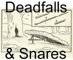 How to Trap   Make Snares, Deadfalls, Bear Traps, Survival, Prep