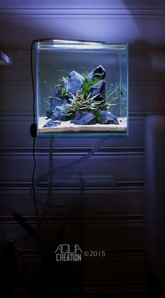 Simon's Aquascape Blog — Favourites: 'Cryptodence' by Mats Hauge An...