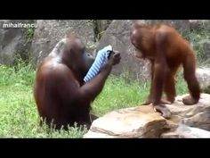 Top 10 Funny Monkey Videos Compilation 2014 NEW 480p