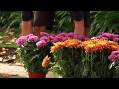 Spring and summer aren't the only times you can keep your garden looking beautiful. Fall is a great time to add some color and beauty to your home's exterior with this simple project.