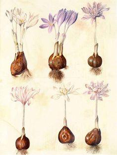 Sorting of Books- vintage illustration slide saffron