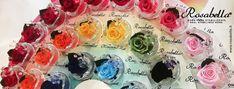 Over the #Rainbow! #Espositore vasetti #Round...tutti i #colori delle #rose! #Rosabella #rosastabilizzata #rosagioiello #madeinitaly Rose, Pink, Roses