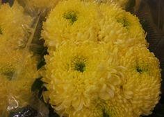 #Chrysanthemum 1head #Palisade yellow; Available at www.barendsen.nl