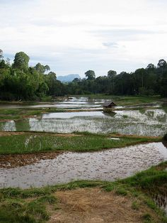 Tana Toraja Regency, South Sulawesi, Indonesia