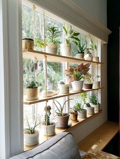 If you've been following my blog, by now you know that I'm a bit obsessed with houseplants. And yard plants. Really, any kind of plant. When we moved into our house 3 years ago, I had j… Plantas Indoor, Diy Hanging Shelves, Plants On Shelves, Indoor Plant Shelves, Ceiling Hanging, Window Shelf For Plants, Hang Plants On Wall, Hanging Plant Diy, Hanging Plants On Fence