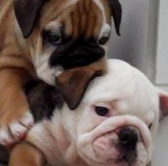 I've got your back, tiny one!