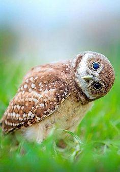 Owl... - Zahra Kurdish - Google+