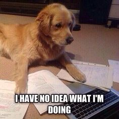 Me when I cant get motivated for school.