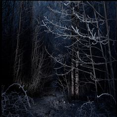 Deep in the forest, Christmas eve by movito, via Flickr