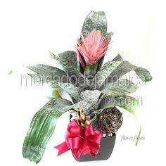 Bromelia Fasciata Pink| Envia Flores