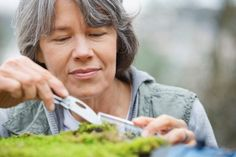 Mature ecologist with penknife collecting moss in forest