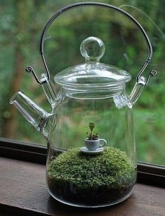 Glass tea pot terrarium: How clever this is! I will try to remember to find interesting clear glass containers to use for terrariums. Terrariums, Moss Terrarium, Terrarium Ideas, Terrarium Table, Terrarium Centerpiece, Terrarium Wedding, Hanging Terrarium, Hanging Planters, Moss Garden