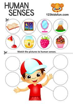Free Printables and Worksheets for Kids. 5 senses Crafts & Activities for Toddlers and Preschoolers. Teach Kids about the 5 senses - touch see smell taste hear. Science activities for school homeschool prehomeschool. Body Parts Preschool Activities, 5 Senses Activities, Craft Activities For Toddlers, Body Preschool, Human Body Activities, Toddler Preschool, Free Preschool, 5 Senses Craft, Five Senses Preschool