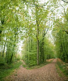 """""""Two roads diverged in a wood and I took the one less traveled by.  And that made all the difference.""""  --- Robert Frost."""