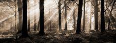 August Morning - Sepia - Fototapeter & Tapeter - Photowall