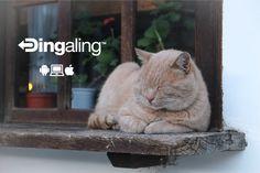 Free Image on Pixabay - Cat, Window, Feline, Sleeping, Nap I Love Cats, Cute Cats, Funny Cats, Cat Window, Window Ledge, Window Sill, Image Chat, Cat Sleeping, Cat Breeds
